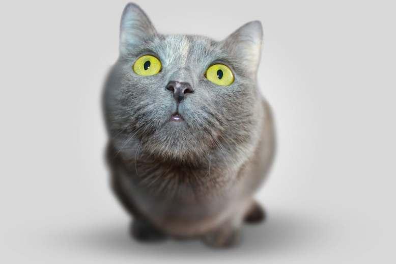 goofy cat